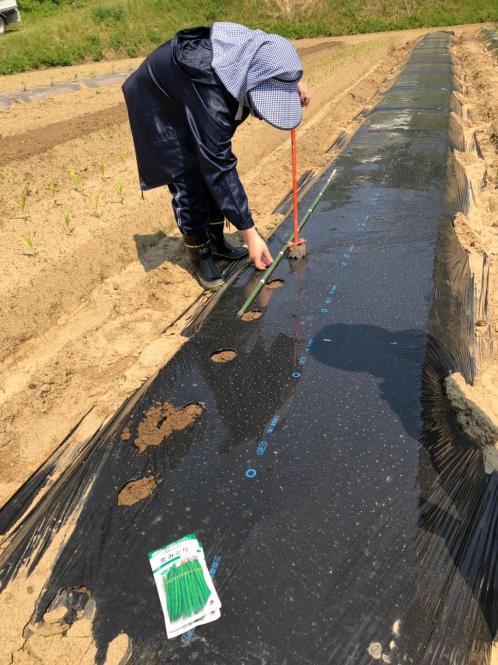 〜福岡 週末農業(第3回目作業)〜 ショッキングな事実&インゲン豆、オクラ、枝豆の種まき