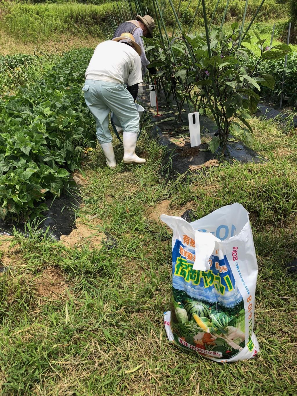 〜福岡 週末農業(第6回目作業)〜 大★収★穫★ 春ジャガイモ・なす・インゲン豆・ピーマンの収穫