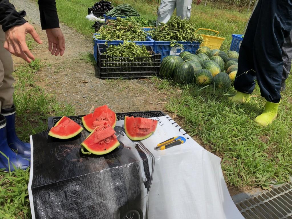 〜福岡 週末農業(第7回目作業)〜 大★収★穫★ スイカ・枝豆・オクラ・ピーマン・ナス・インゲン豆の収穫