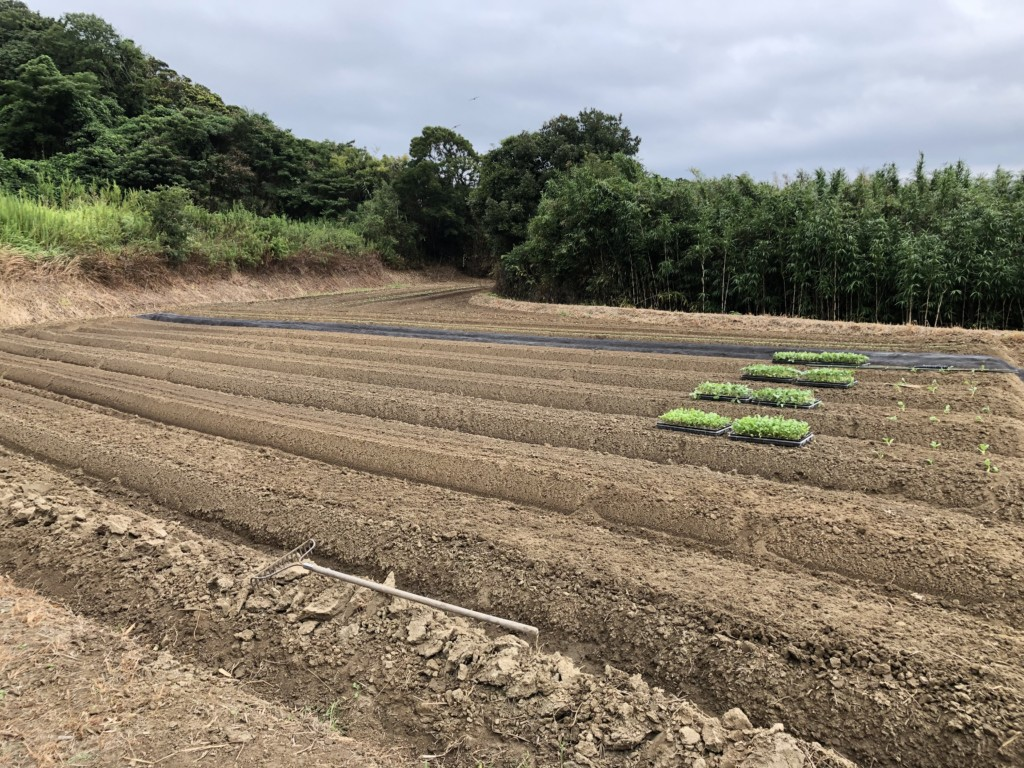 〜福岡 週末農業(第10回目作業)〜7種類の野菜とマルチ張り