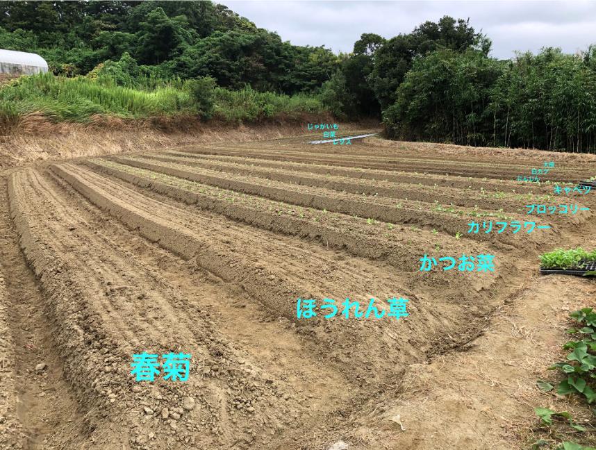 〜福岡 週末農業(第11回目作業)〜ほっこり♫しつつの間引き作業や畝の雑草とり