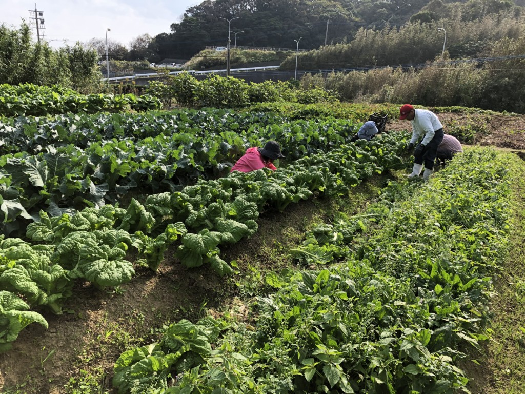 福岡,週末農業