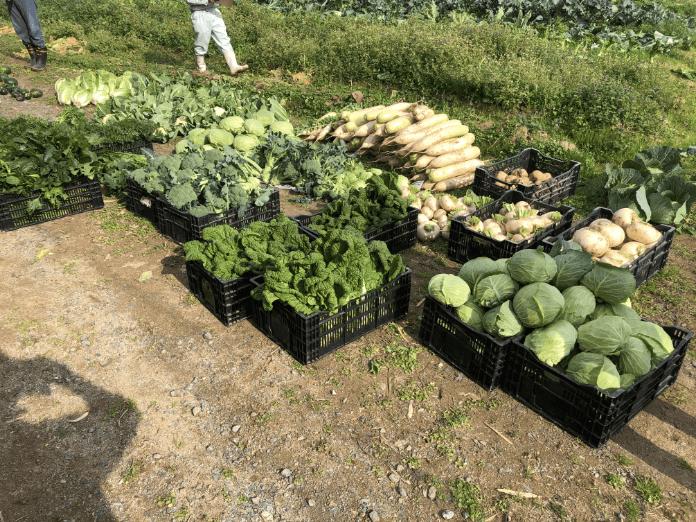 福岡 週末農業 収穫