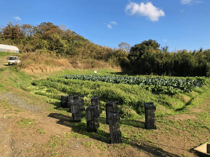 福岡 週末農業