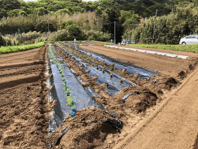 福岡の週末農業