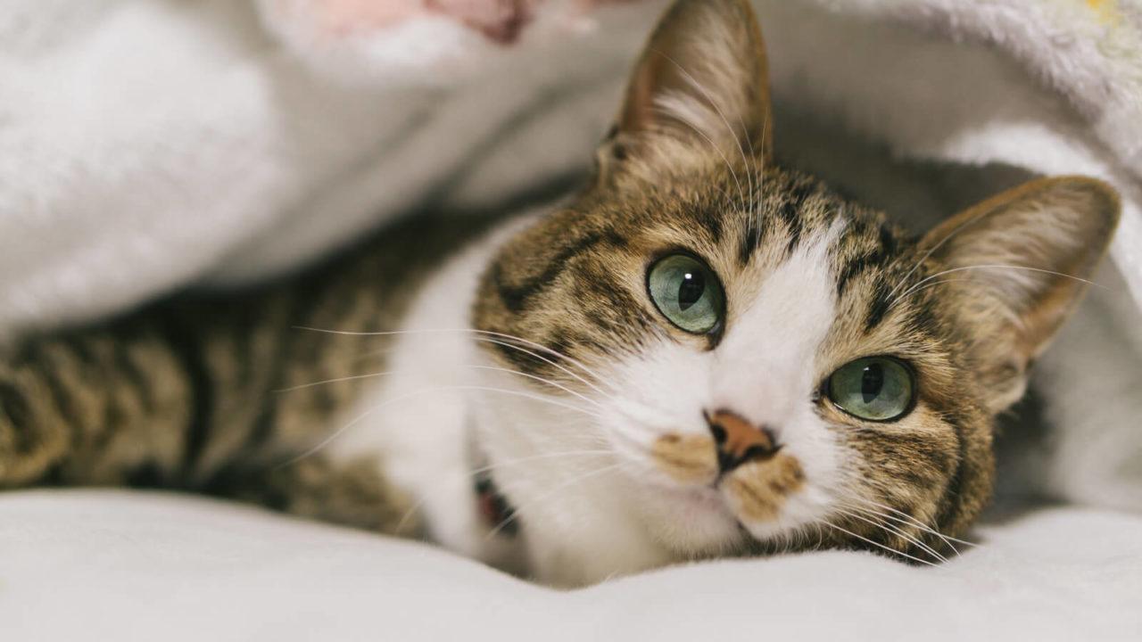【キムラ緑子の猫の名前は?】「猫に依存する女たち」で紹介されている猫グッズの購入方法は?【今夜くらべてみました】
