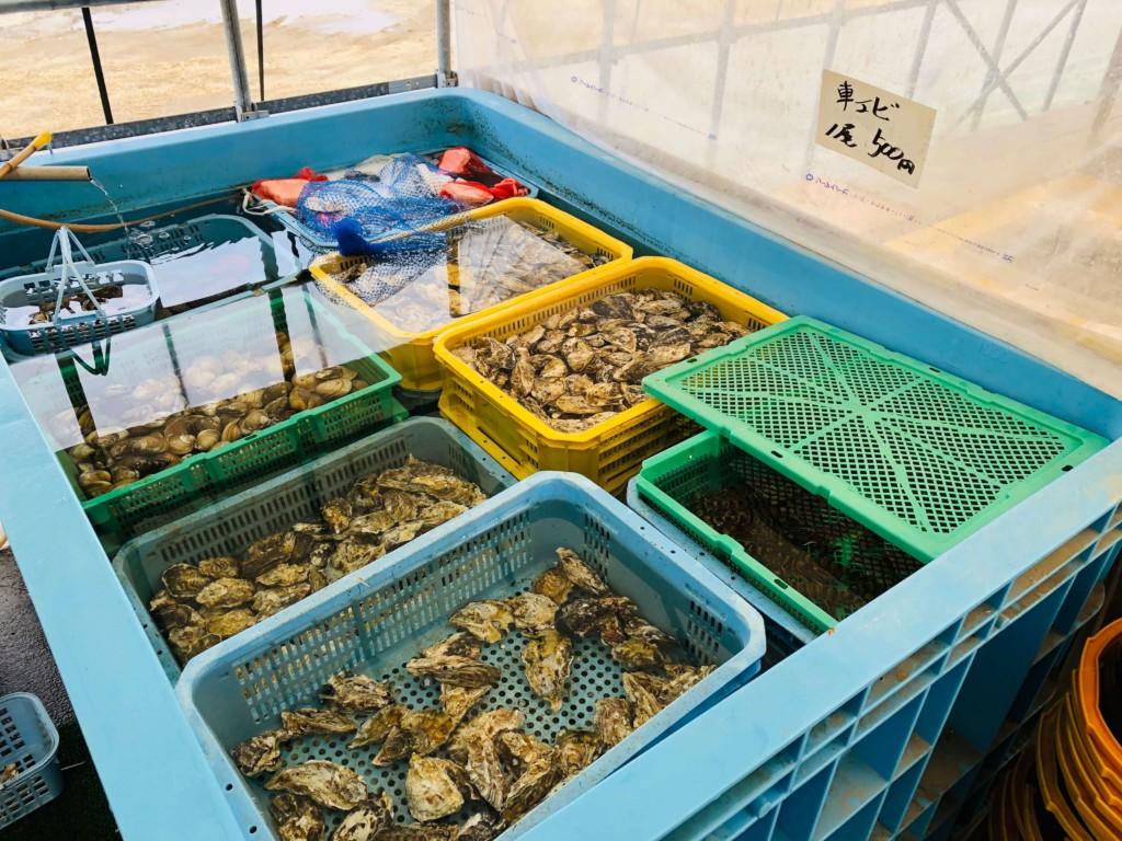 福吉漁港の牡蠣小屋「カキの阿部 飛龍丸」の生簀