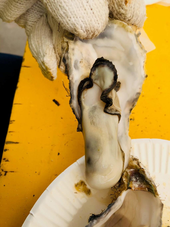 福吉漁港の牡蠣小屋「カキの阿部 飛龍丸」の一粒かき