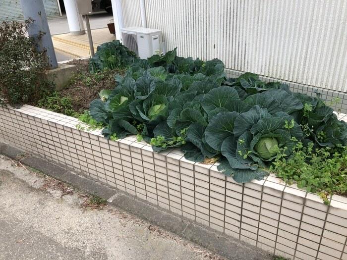 JAファーム福岡