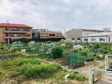 【福岡 週末農業】貸し農園の始め方は?ブログで現役サラリーマンがご紹介