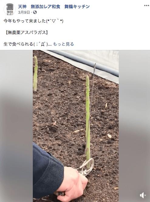無農薬アスパラガス