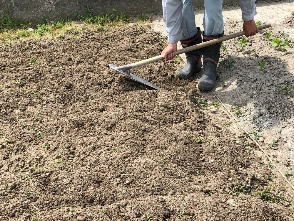 鍬で畝作り