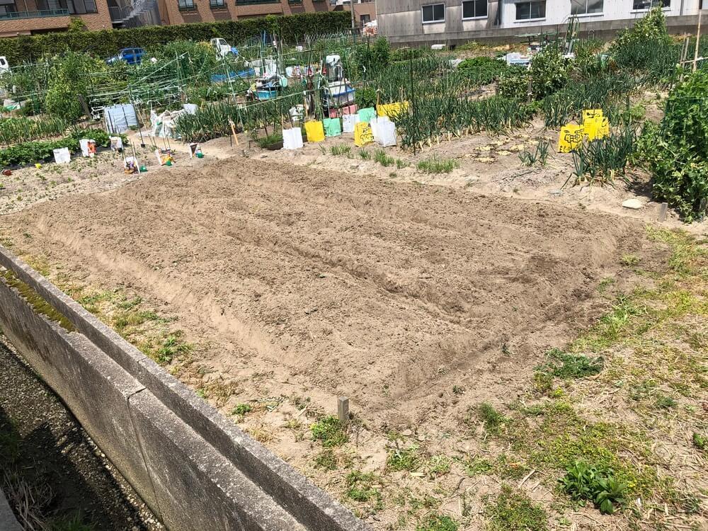 福岡の週末農業 畝立て