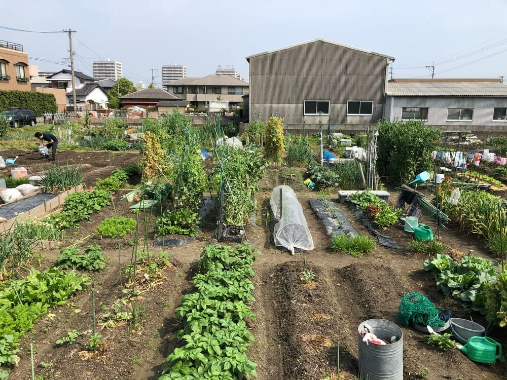 福岡 貸し農園の様子