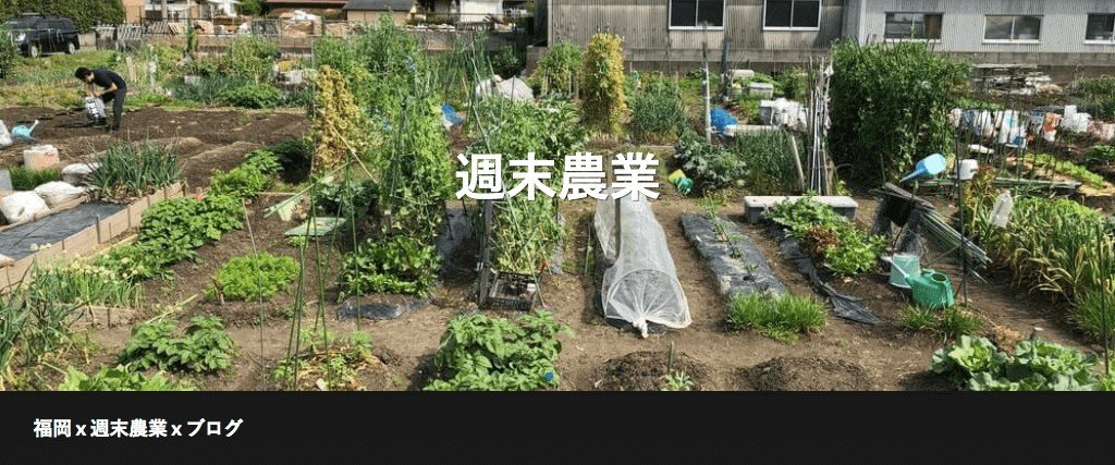 【福岡 週末農業】黒マルチ張りの方法(初心者が張ってみた)