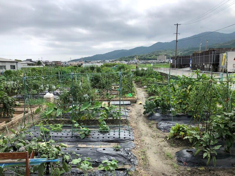福岡週末農業 貸し農園の様子