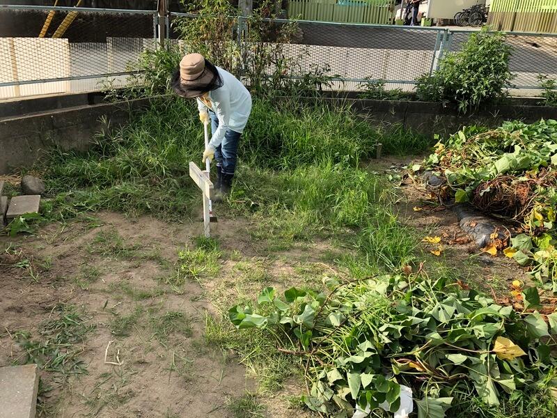 草刈りとサツマイモつる