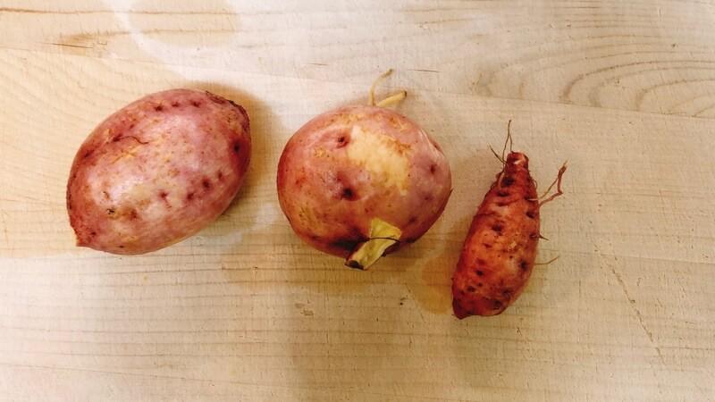 小ぶりなサツマイモ(安納芋)