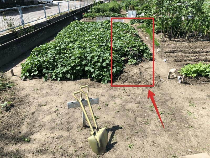 【福岡 週末農業】安納芋を収穫してみた