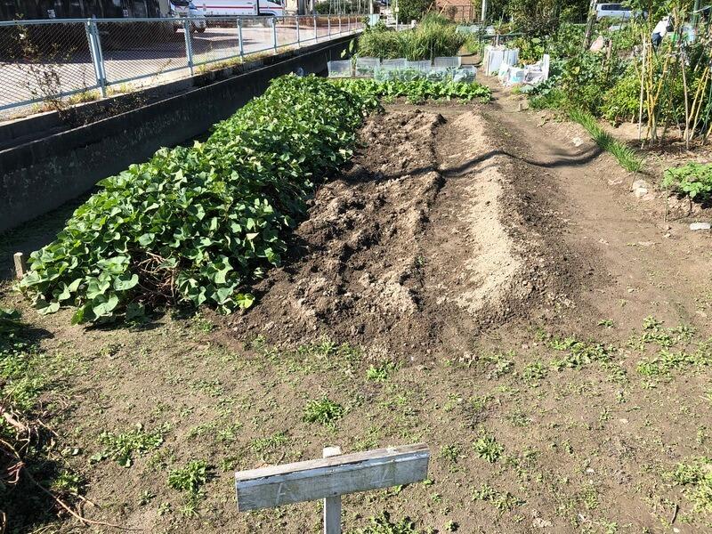 福岡 週末農業 農園 シルクスイート