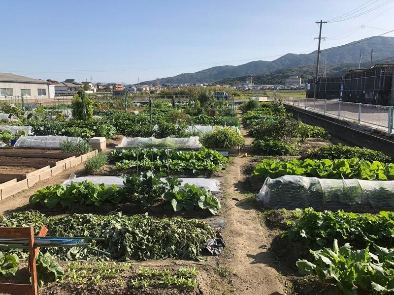 福岡の農園