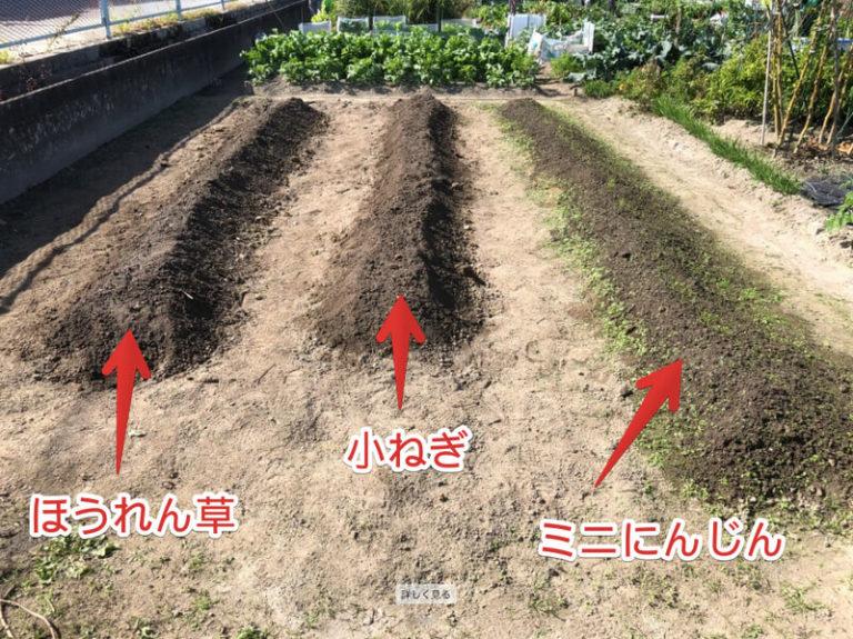 【福岡 週末農業】秋冬野菜の種まき