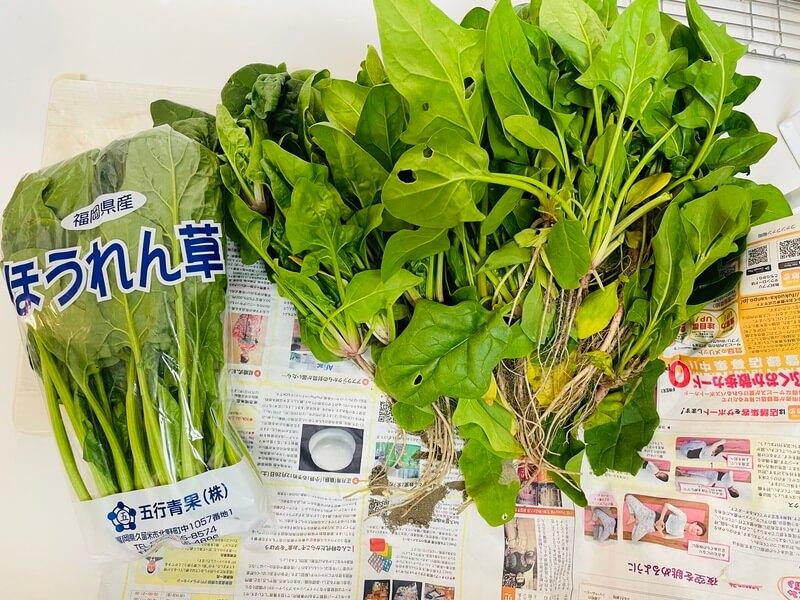 福岡の貸し農園のほうれん草と市販品のほうれん草