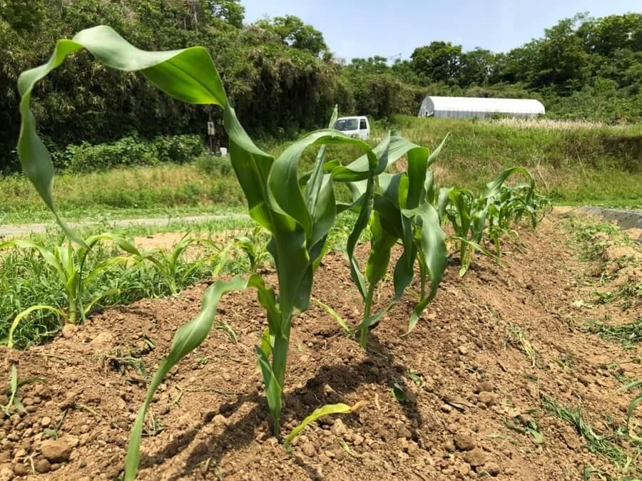 シェア畑のメリットを週末農業3年目の私が解説【農業初心者に超オススメ!】