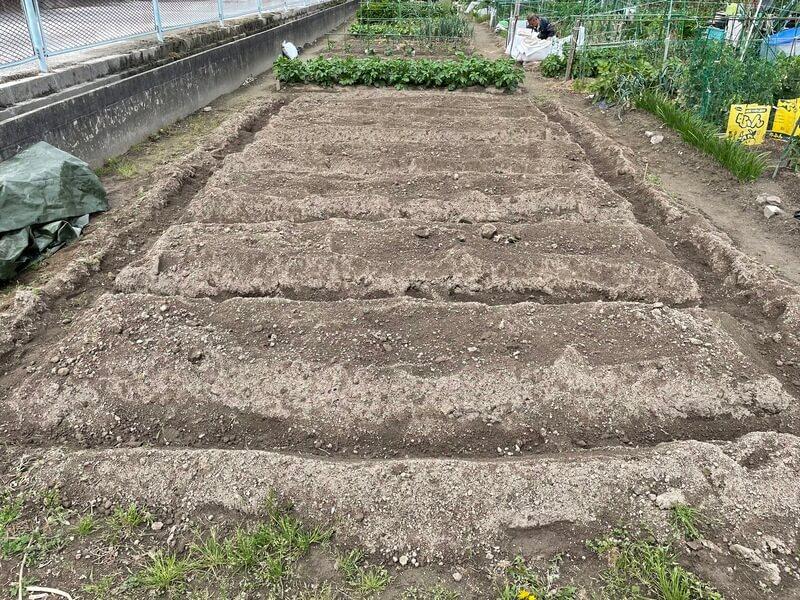 福岡の貸し農園の畝