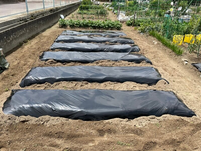 黒マルチを張った、福岡の貸し農園の畝