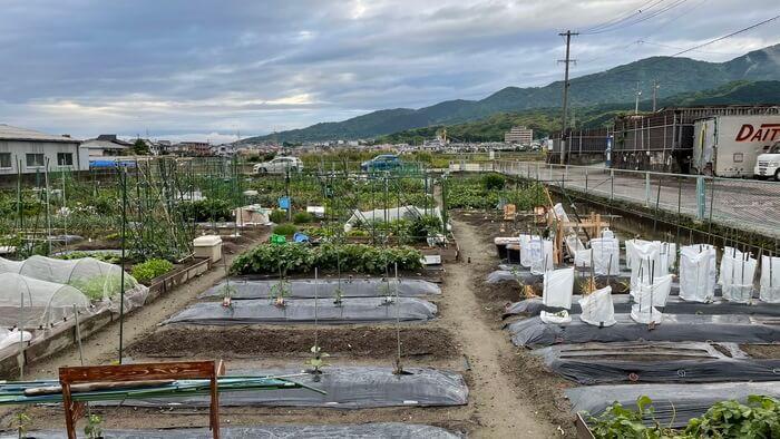 福岡の貸し農園での週末農業