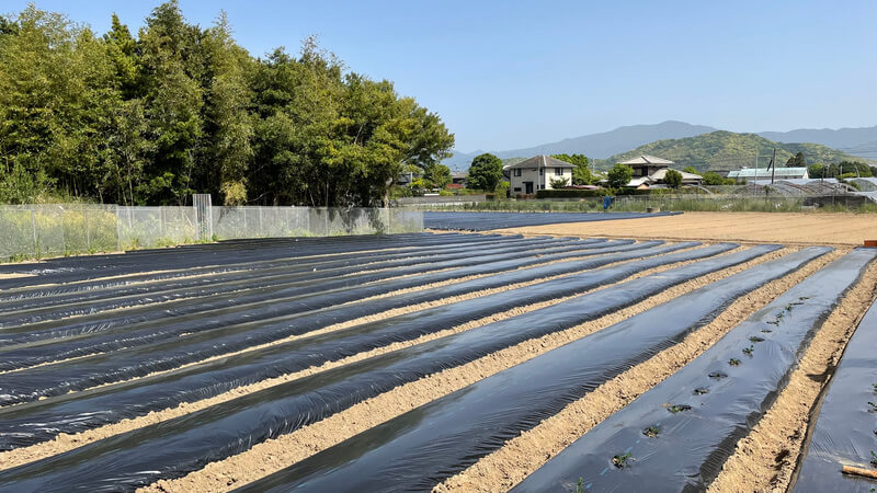 糸島夢農園の畑