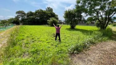 糸島の耕作放棄地